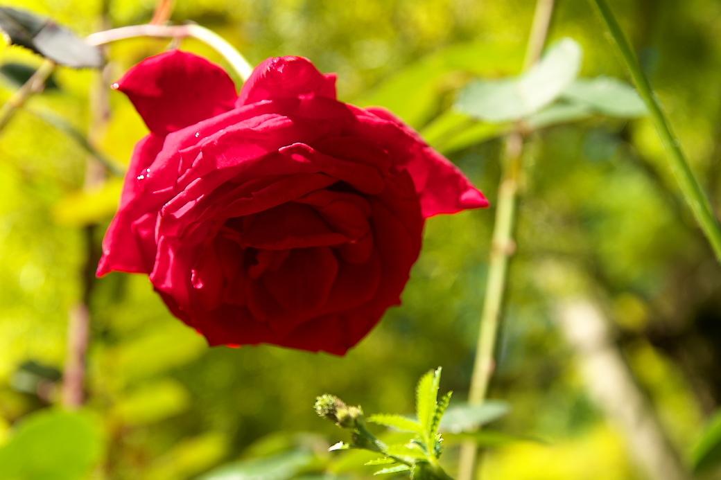 小さな花壇_11