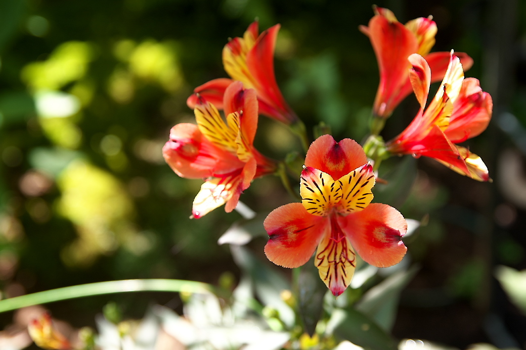 小さな花壇_16