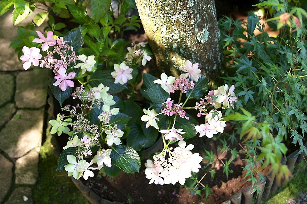 小さな花壇_17