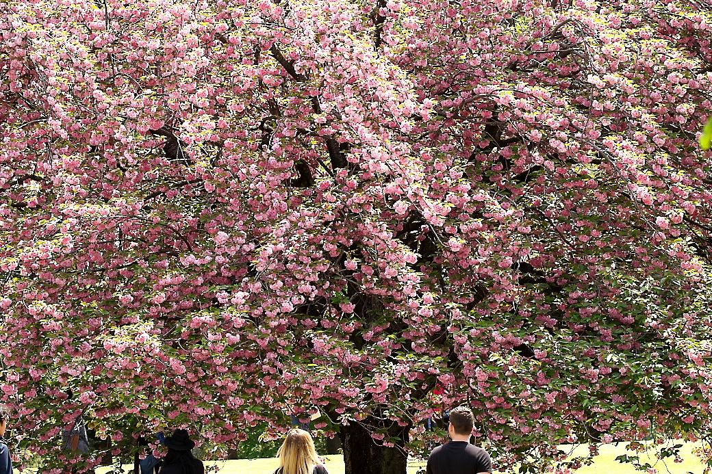 園内の花_1