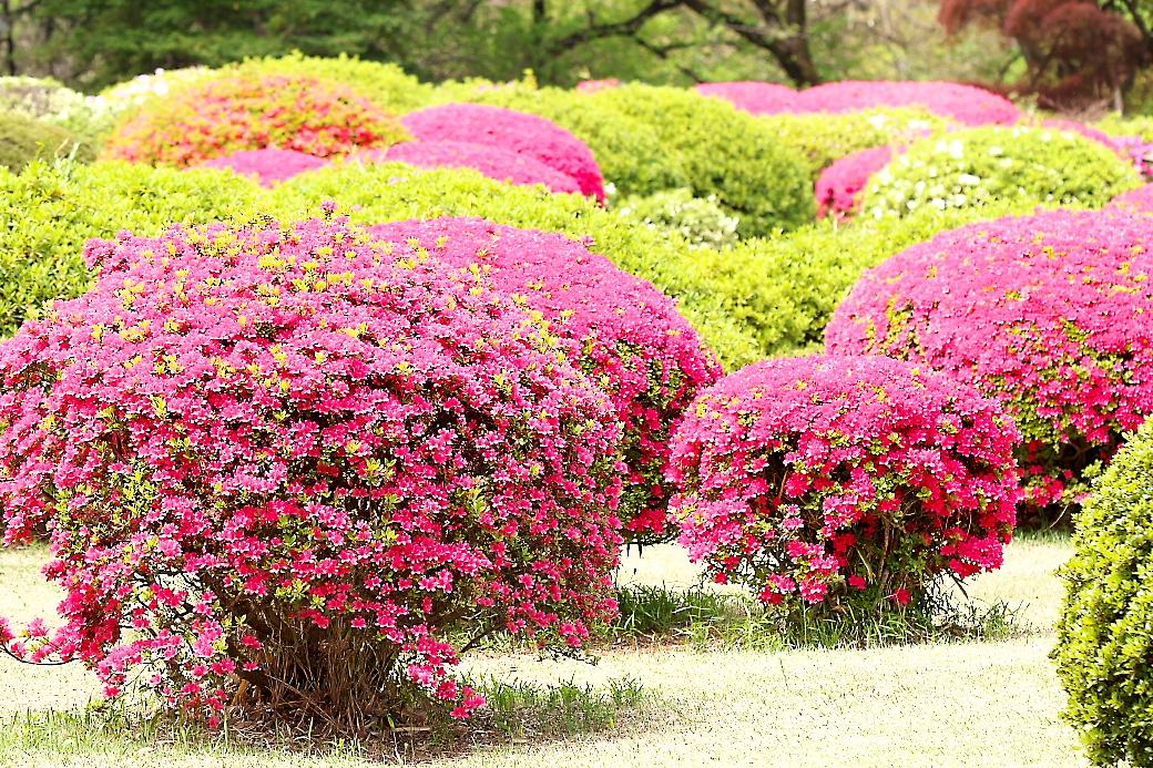 園内の花_2