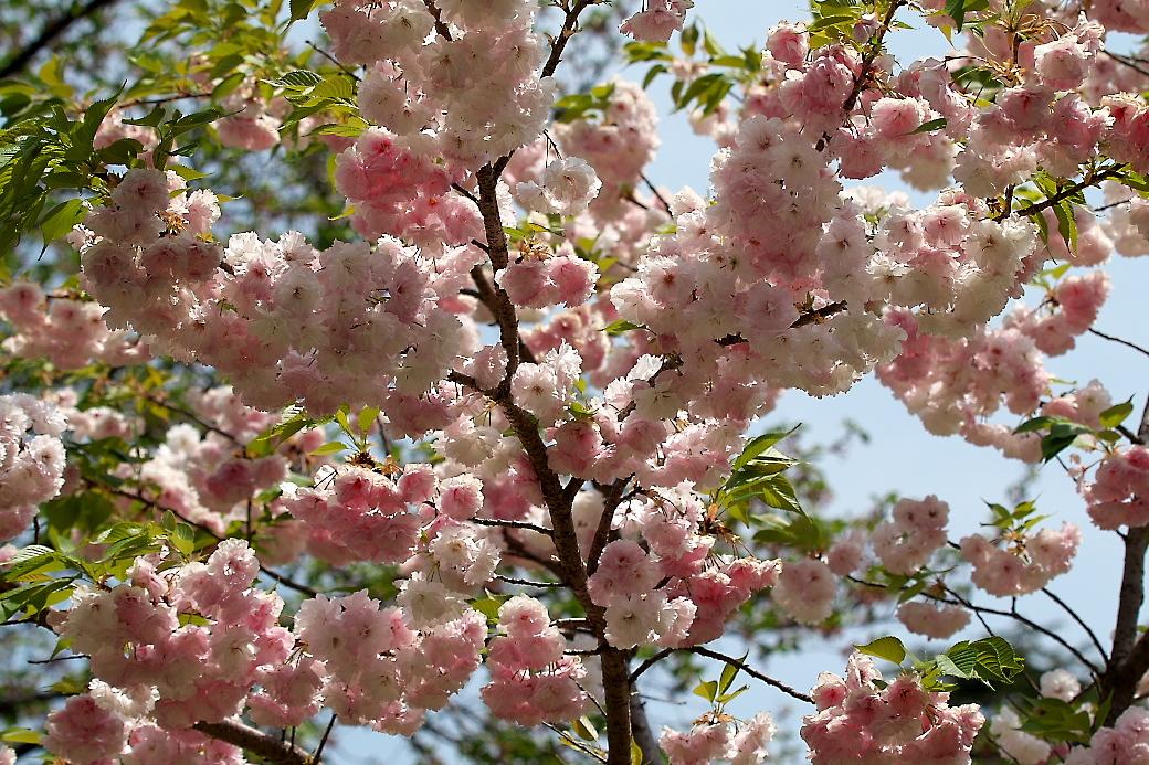 園内の花_4