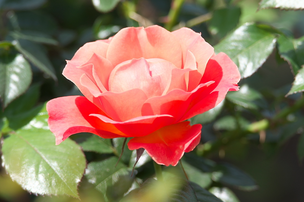 新宿御苑の花_3