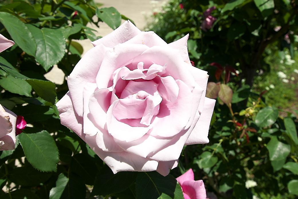 まずは花を愛でる_2