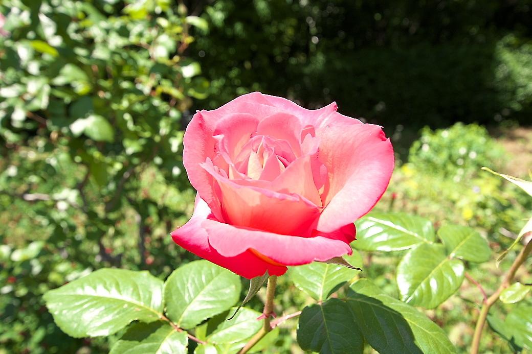 まずは花を愛でる_5