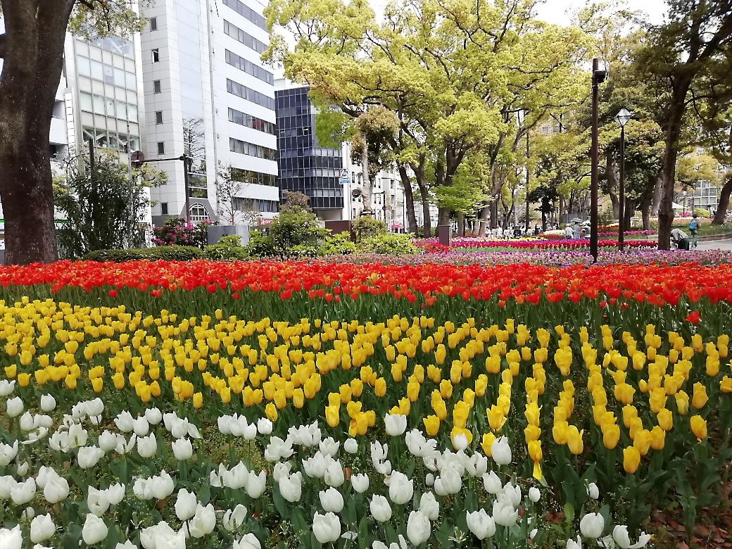横浜公園近辺_1