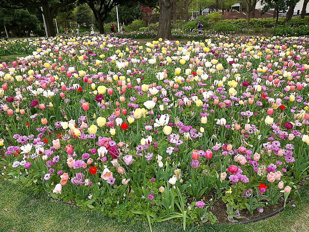 ガーデンネックレス横浜2019_3