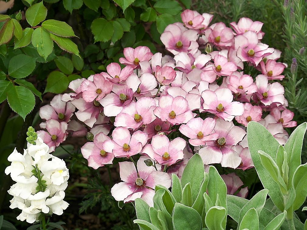 常設の花壇_4
