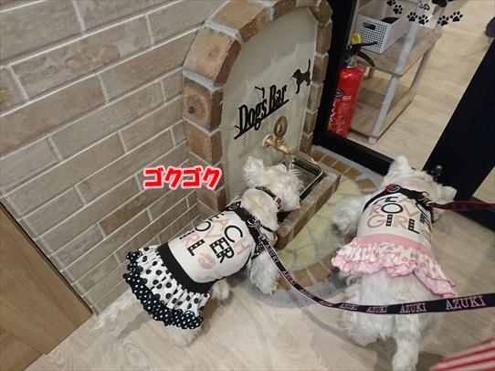 cafe3_201904101659488a3.jpg