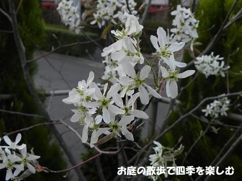 jyu-nberi-64.jpg