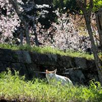 tetsugaku12.jpg