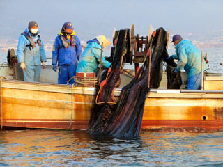滋賀県が実施した外来魚生息量調査の様子