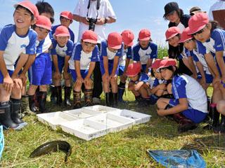早崎内湖ビオトープで生き物の観察をする小学生ら。ライギョは芝生に転がされてるぞ・・・(泣)