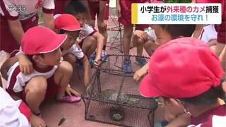 佐賀城の濠で捕獲したミドリガメを観察する児童ら