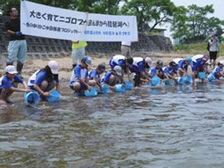 田んぼで育ったニゴロブナの稚魚を琵琶湖に放流する児童ら
