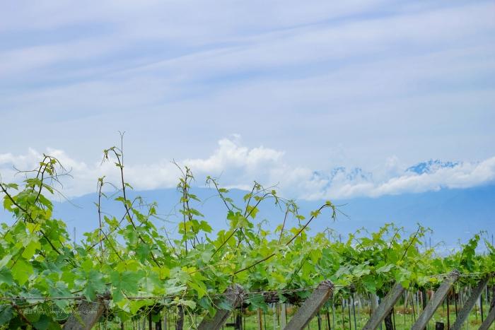 甲州ワイン2246