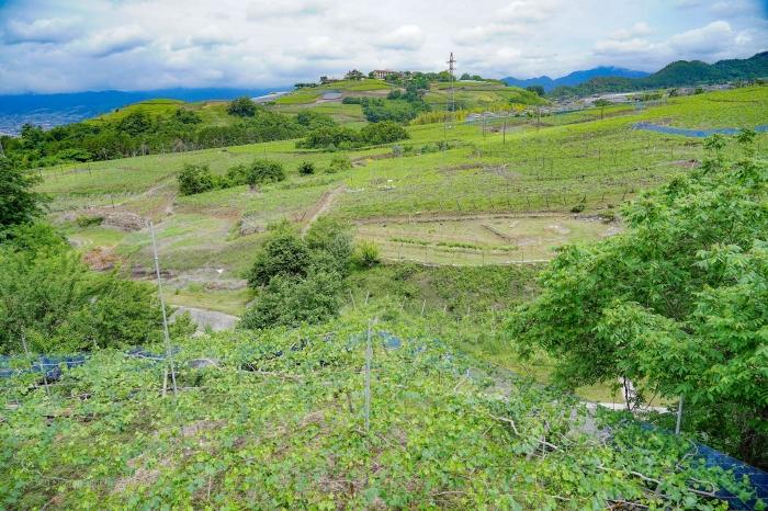 甲州ワイン2126