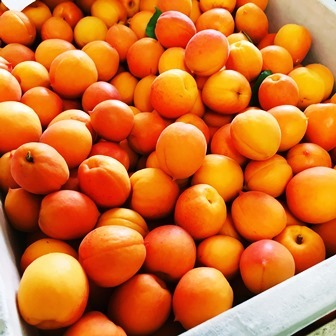 abricot-webs.jpg