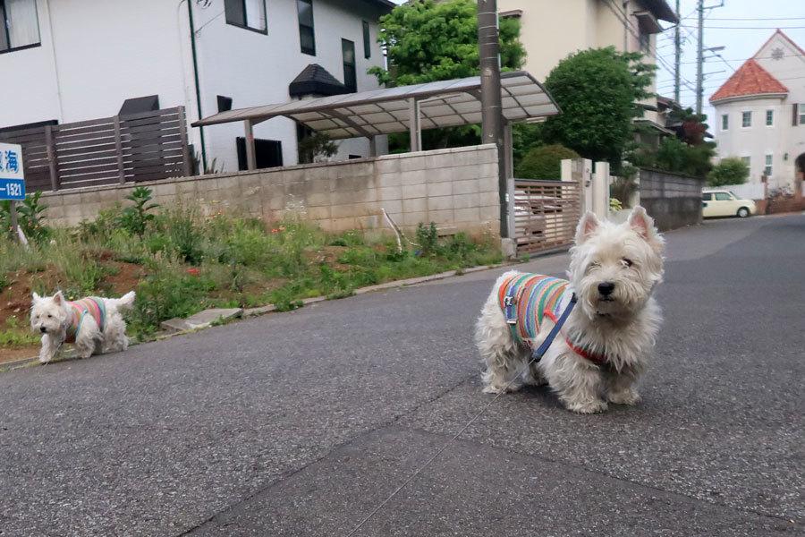 yasuminohihaenkaigahirakatererune3.jpg