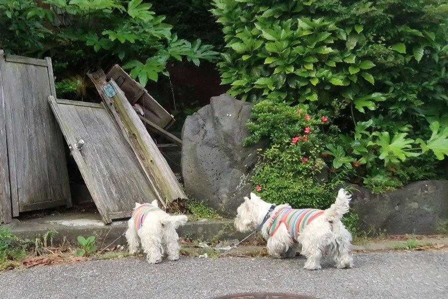 yasuminohihaenkaigahirakatererune4.jpg