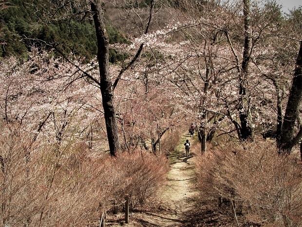 6 19.4.9  日向山スケッチハイク (108)