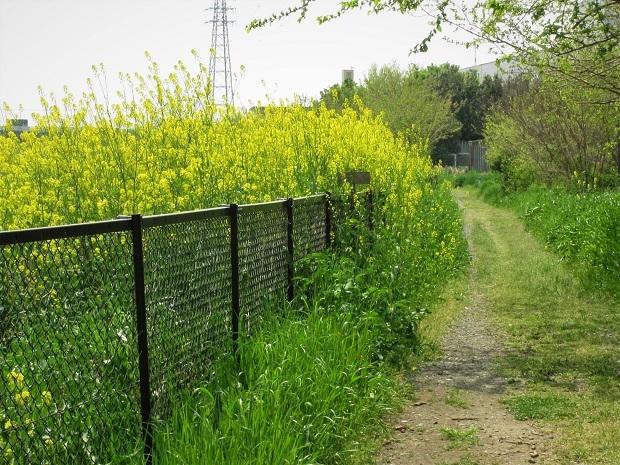19.4.19 癒しの春散歩 (14)