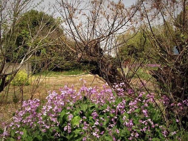19.4.19 癒しの春散歩 (26)