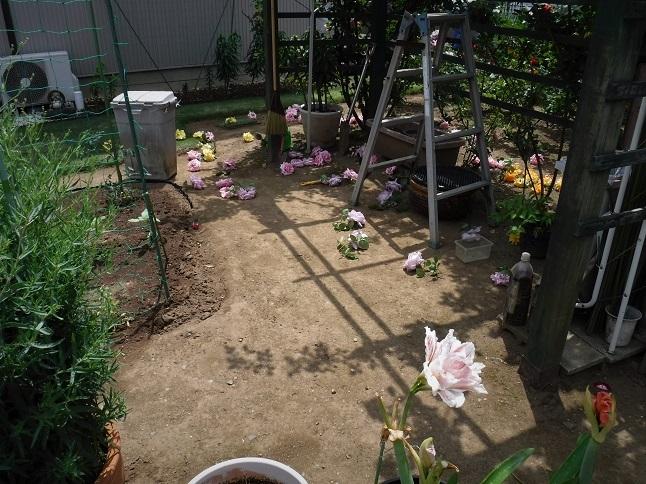 19.5.16 散歩道とバラの庭。パステル大持山  (2)