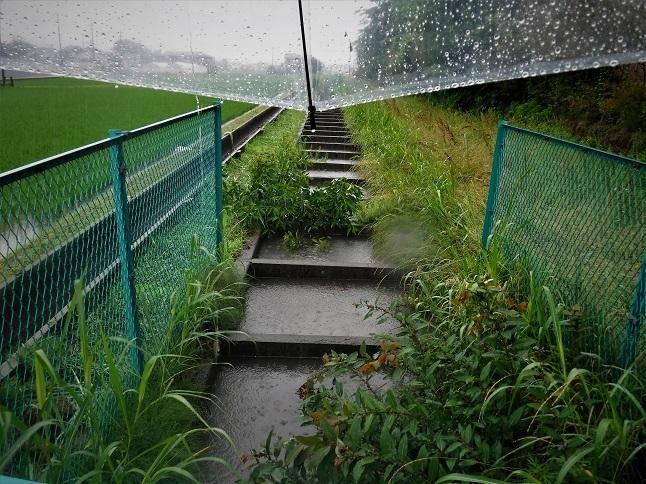 19.6.10 雨の中民謡稽古へ (48)