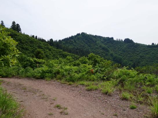 gobyuu19620098.jpg