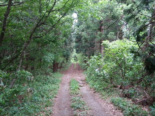 saruhira196150010.jpg