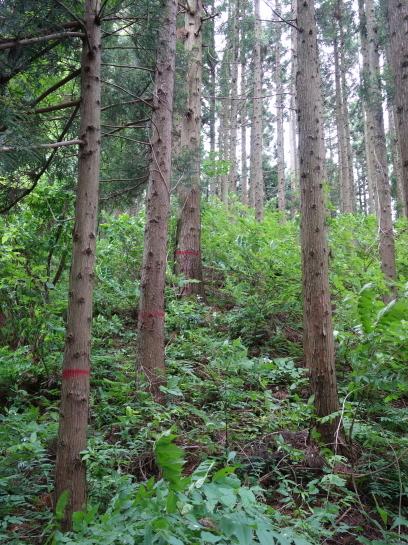 saruhira196150037.jpg