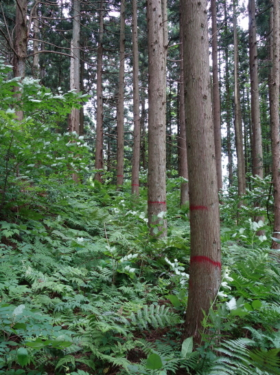 saruhira196150041.jpg