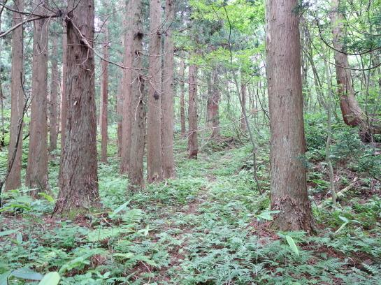 saruhira196150043.jpg