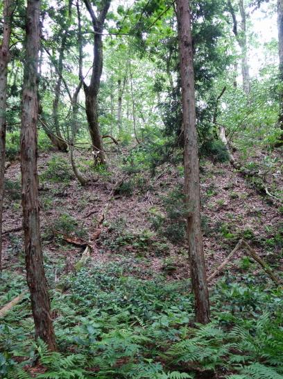 saruhira196150051.jpg