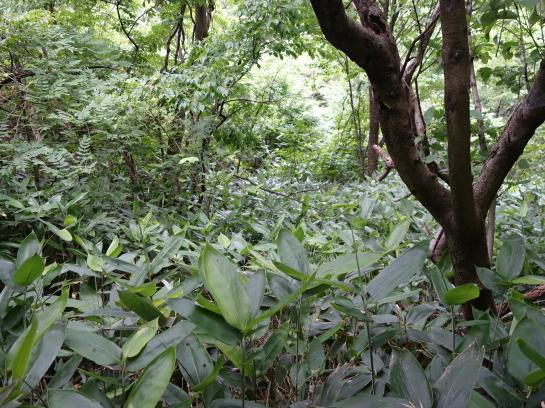 saruhira196150062.jpg