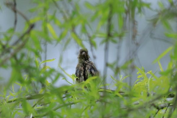 不明_塩嶺小鳥の森