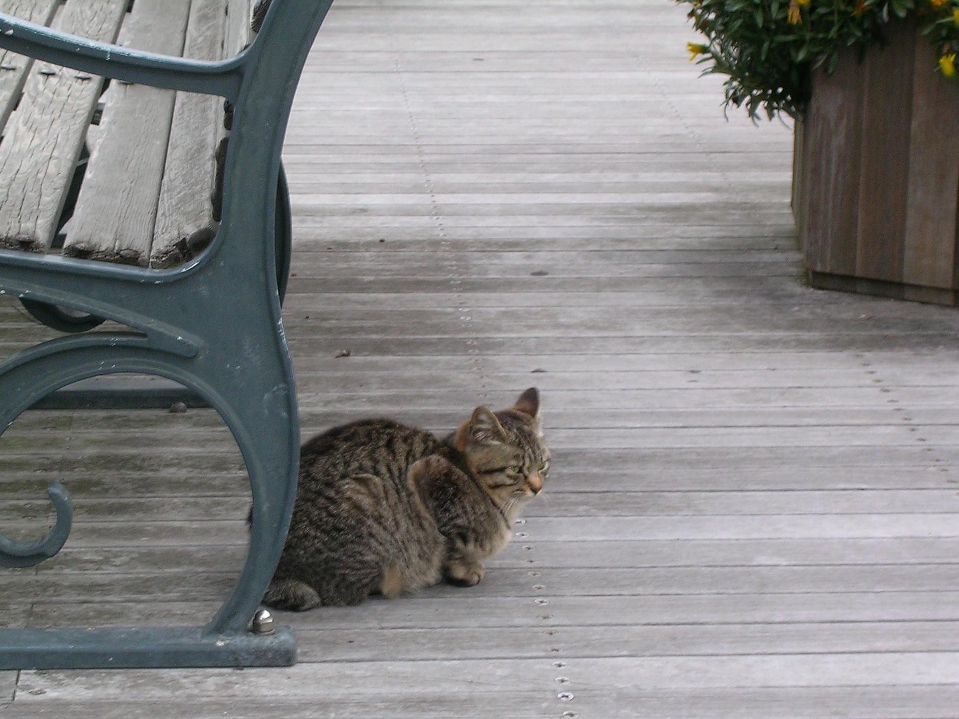 猫とベンチ