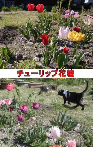 チューリップと猫