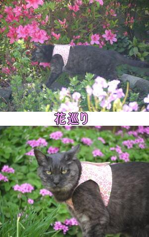 猫の花巡り