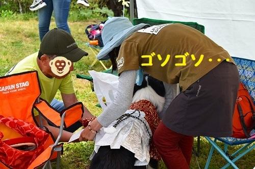 s-2019611wannwaなつおーす_190519_0004