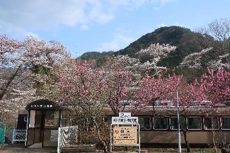 わたらせ渓谷鐡道20190407-15