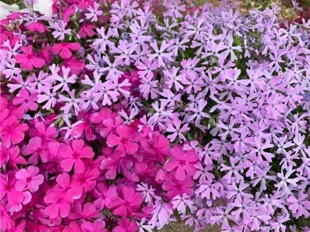 春の花20190429-05