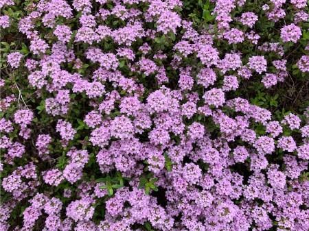 春の花20190429-02