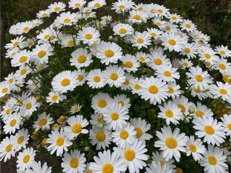 春の花20190429-01