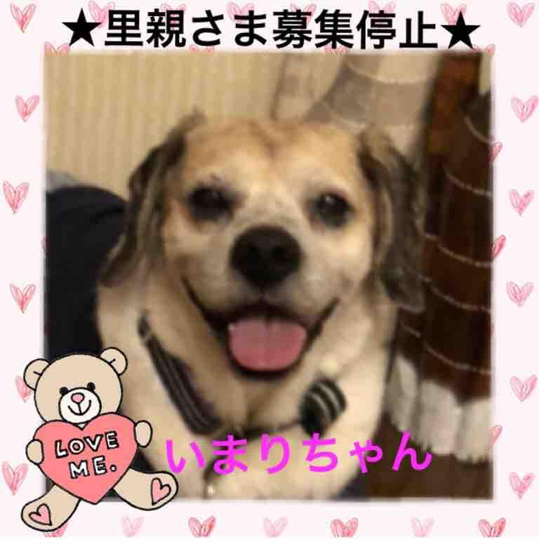fc2blog_20190614141148f1c.jpg