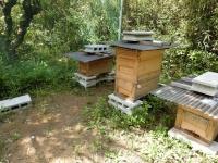 ミツバチも元気そう♪(20190510)