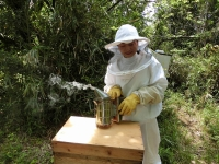 燻煙器はミツバチとのコミュニケーションツール♪(20190510)