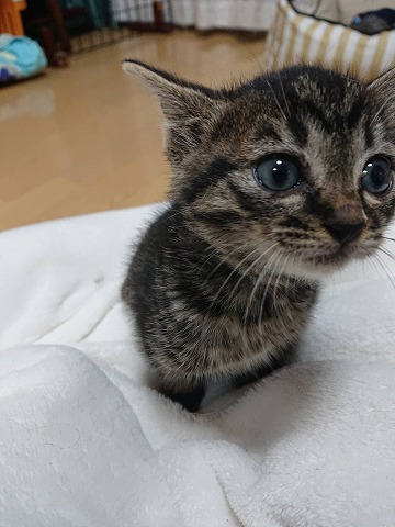 子猫ちゃん達 016