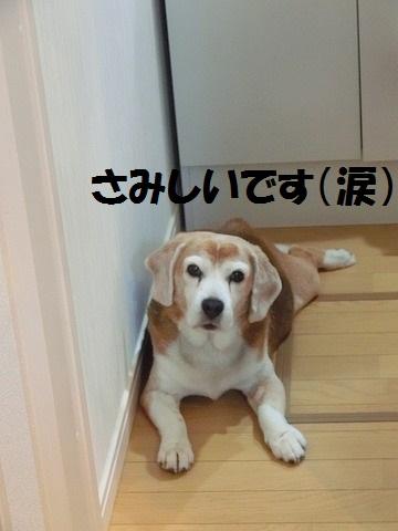 孝子さんご支援・キートス・きなこ 006